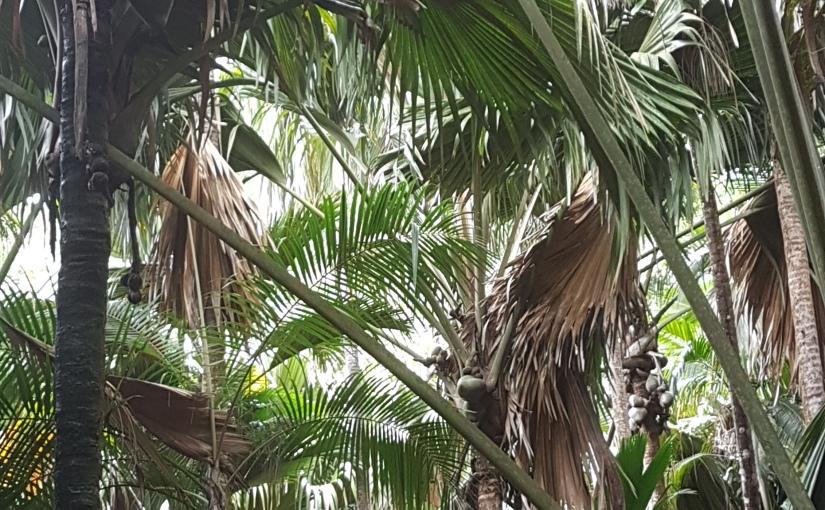 Vallee de Mai und andere Eindrücke auf Praslin(Seychellen)